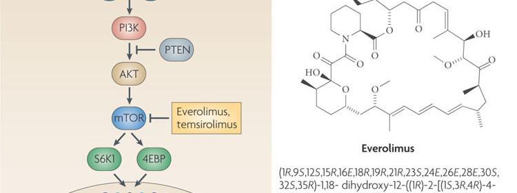 Everoloomus