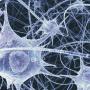 epilepsi_hjerne_neuroner_blaa_541
